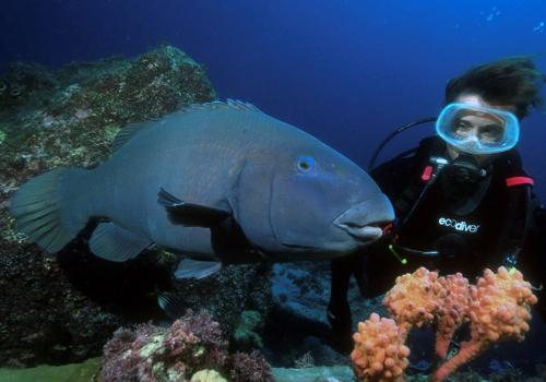A friendly Blue Groper checks out Cherie at Kurnell