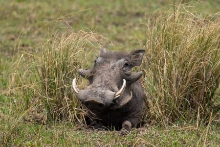 Wildlife encounters are not all about `The Big Five' the passionate animal lover and photographer will enjoy encounters with the `Ugly Five' which includes the ubiquitous warthog.