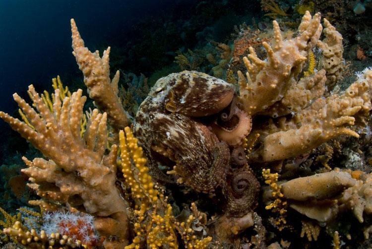 2011 05 26 Octopus 39 S Garden