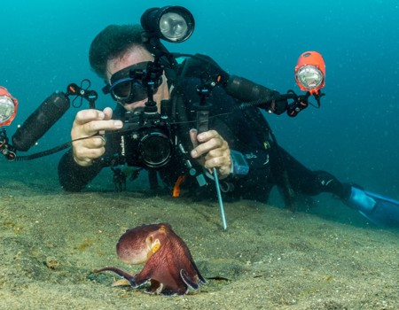 Les Schumer demonstrates excellent photographer procedure using his fin tips and hand probe to avoid stirring up the sand while photographing a coconut octopus on the move.